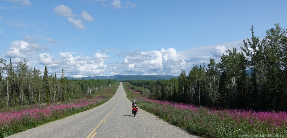 Cycling Klondike Highway northbound to Dawson City.